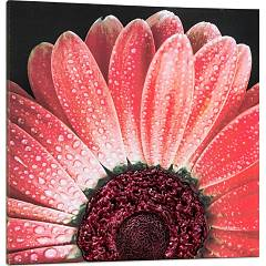 Pintdecor Red Daisy Pannello design cm 100 x 100